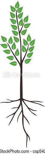 árvore, folhas, verde, jovem - csp54237009