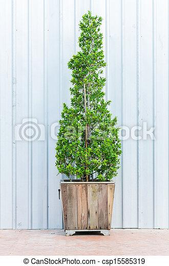árvore - csp15585319