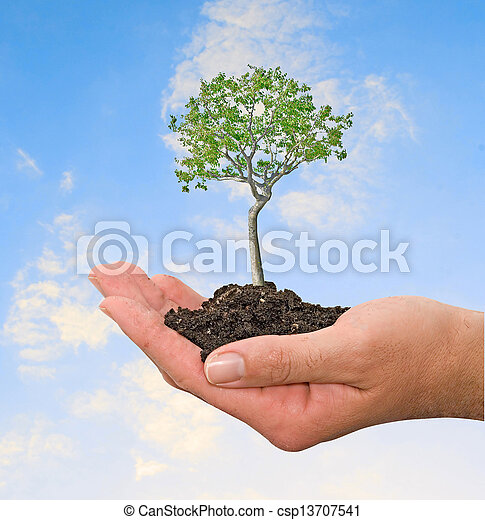 árvore, mãos - csp13707541