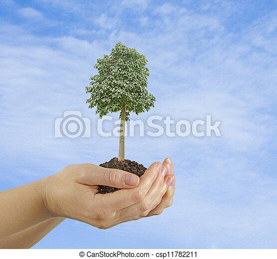 árvore, mãos - csp11782211