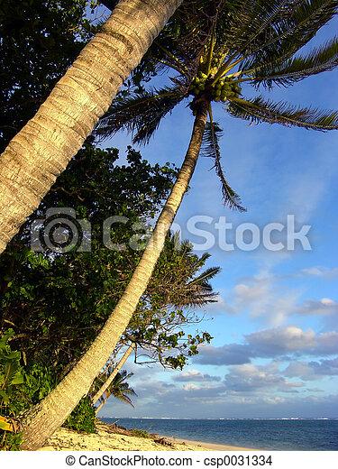 árvore palma - csp0031334