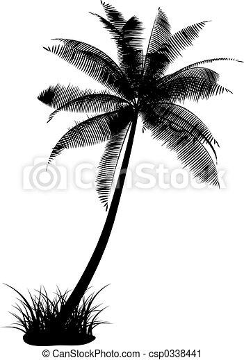 árvore palma - csp0338441