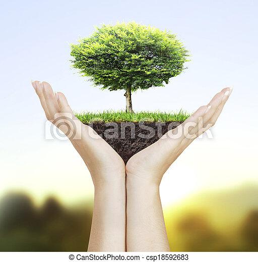 árvore pequena, mão - csp18592683