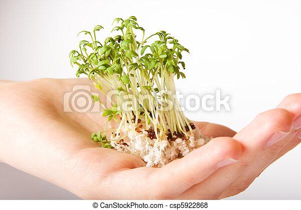 árvore pequena, vida, verde, mão - csp5922868