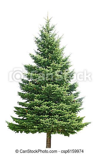 árvore, pinho - csp6159974