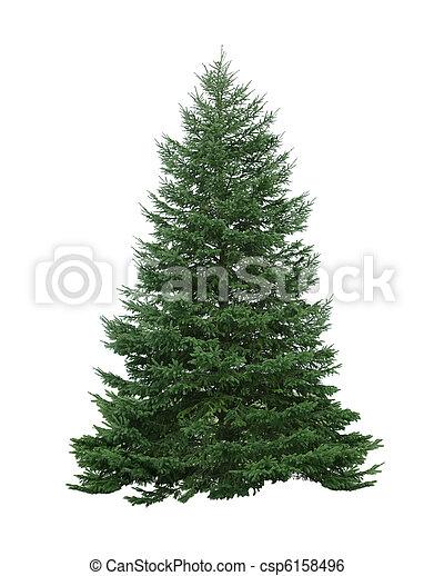 árvore, pinho - csp6158496