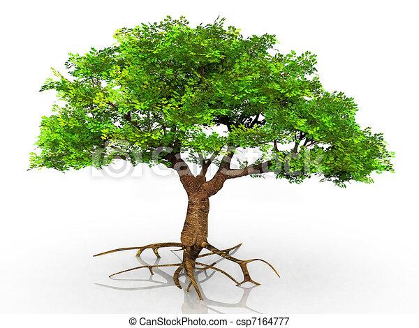 árvore, raizes, exposto - csp7164777