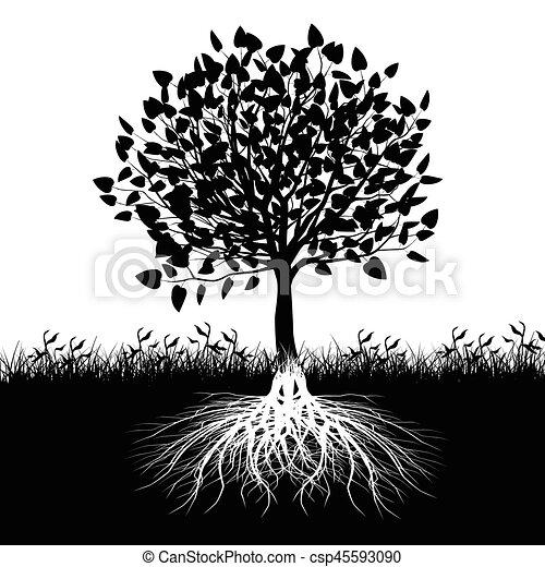 árvore, silueta, raizes - csp45593090