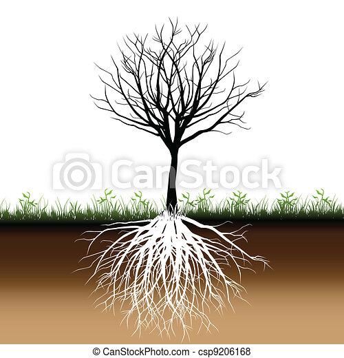 árvore, silueta, raizes - csp9206168