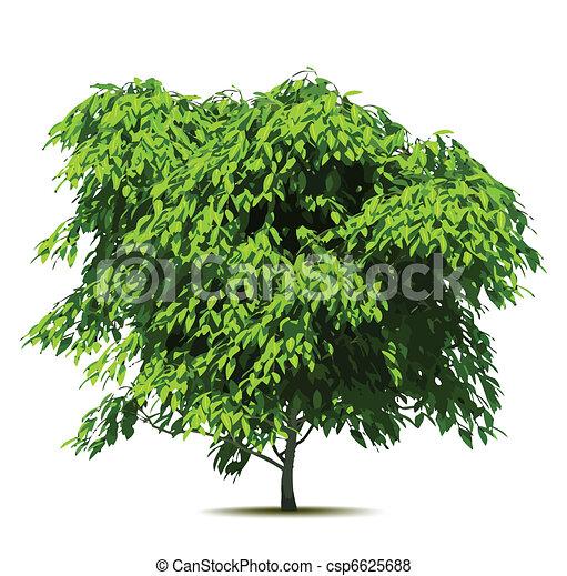 árvore., vetorial, verde - csp6625688