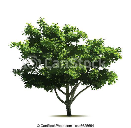 árvore., vetorial, verde - csp6625694