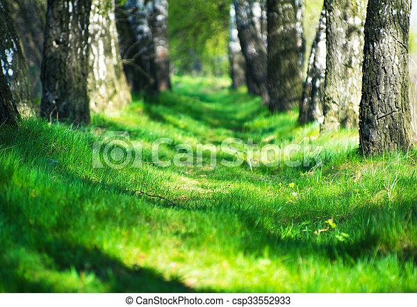 árvores - csp33552933