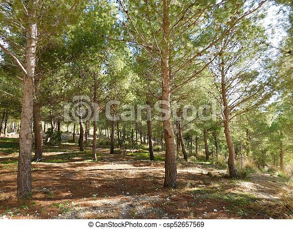 árvores - csp52657569
