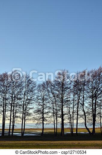 árvores, fila - csp12710534