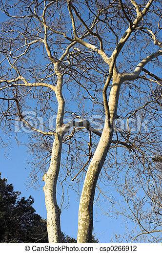 árvores inverno - csp0266912