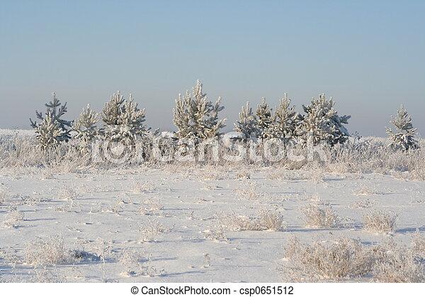 árvores inverno - csp0651512