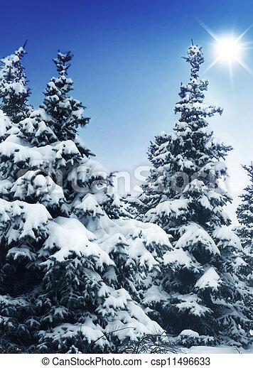árvores inverno - csp11496633