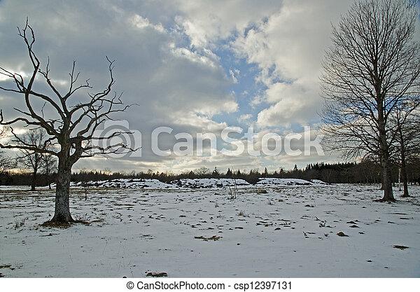 árvores inverno - csp12397131