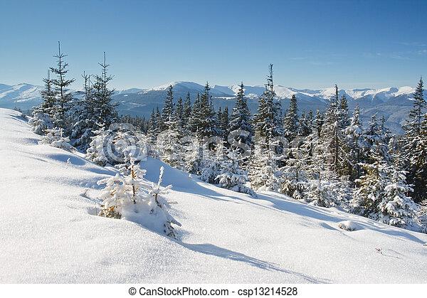 árvores inverno - csp13214528