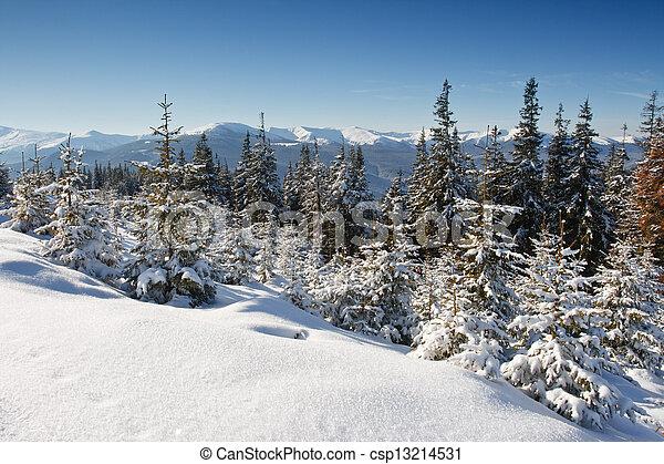 árvores inverno - csp13214531