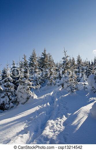 árvores inverno - csp13214542