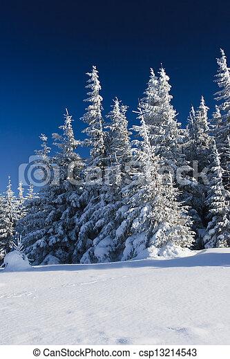 árvores inverno - csp13214543