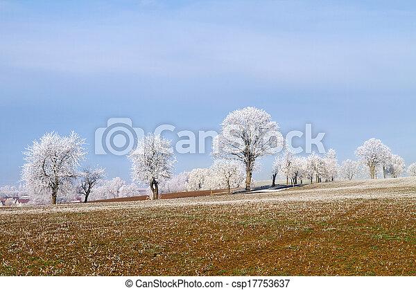 árvores inverno - csp17753637