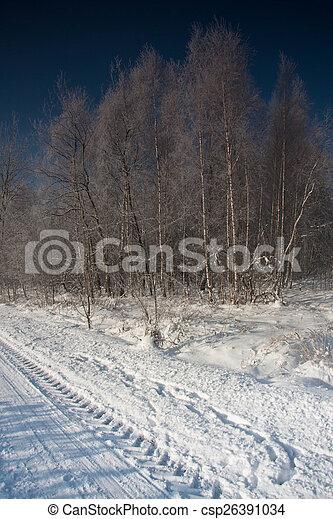árvores inverno - csp26391034