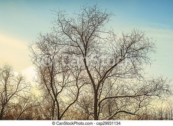 árvores inverno - csp29931134