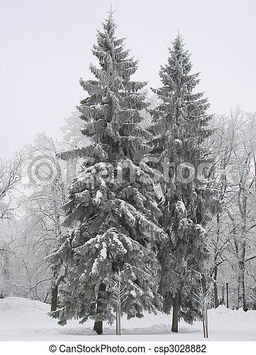 árvores inverno - csp3028882