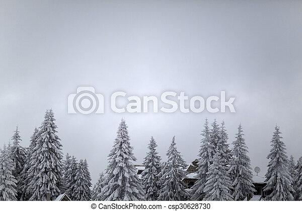 árvores inverno - csp30628730