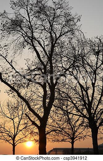 árvores inverno - csp3941912