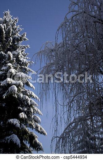 árvores inverno - csp5444934