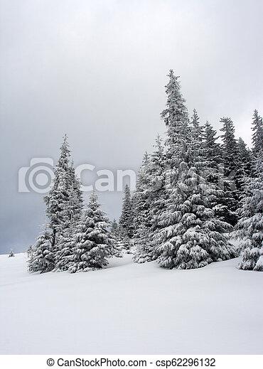 árvores inverno - csp62296132