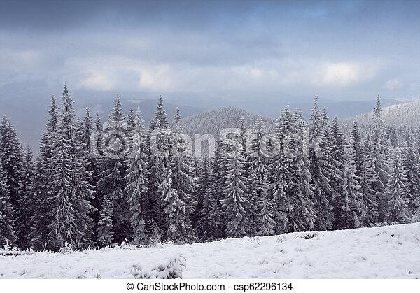 árvores inverno - csp62296134