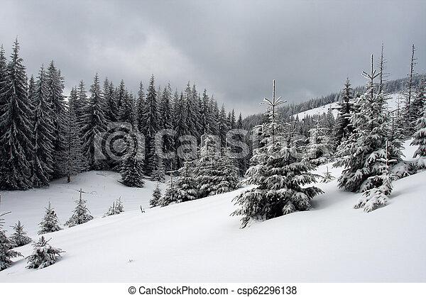 árvores inverno - csp62296138