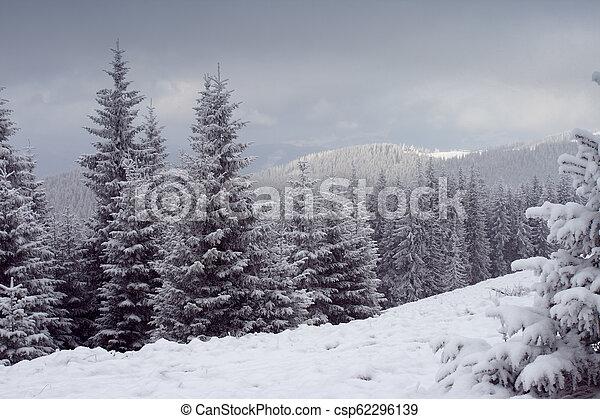 árvores inverno - csp62296139