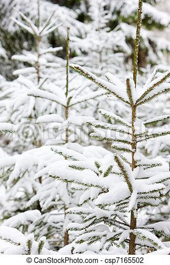 árvores inverno - csp7165502