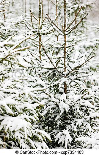 árvores inverno - csp7334483