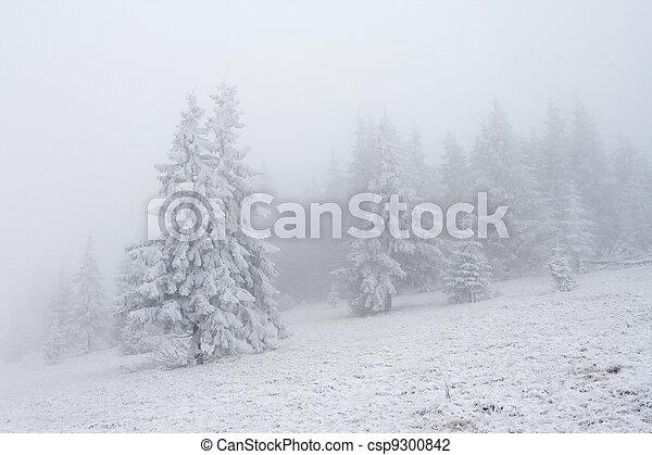 árvores inverno - csp9300842