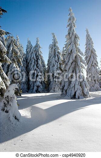 árvores inverno - csp4940920