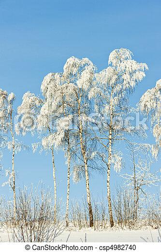 árvores inverno - csp4982740