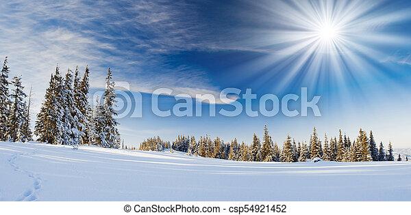 árvores inverno - csp54921452