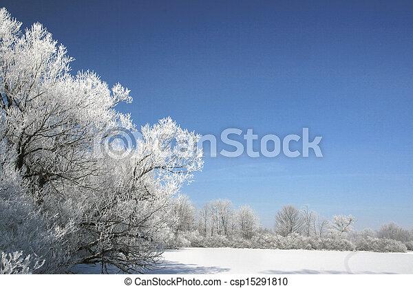 árvores inverno - csp15291810