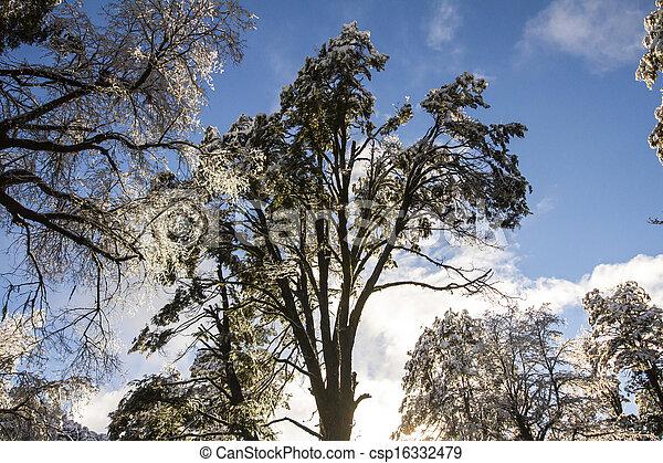 árvores inverno - csp16332479
