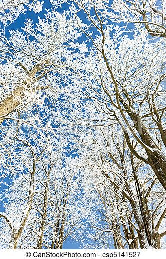 árvores inverno - csp5141527