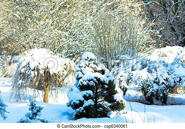 árvores inverno - csp6340061