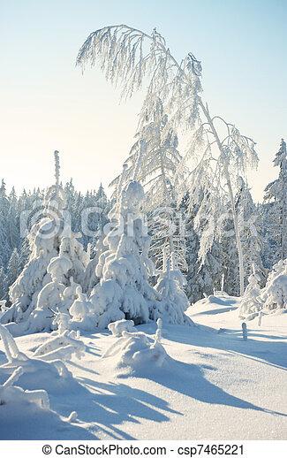 árvores inverno - csp7465221
