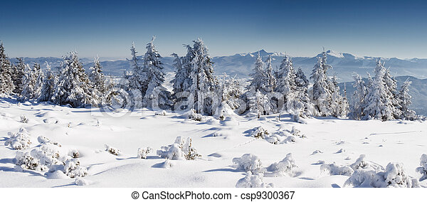 árvores inverno - csp9300367
