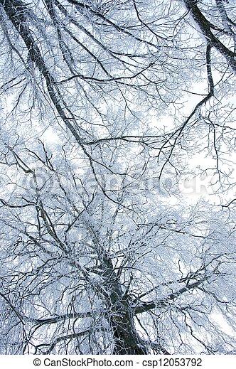 árvores inverno - csp12053792